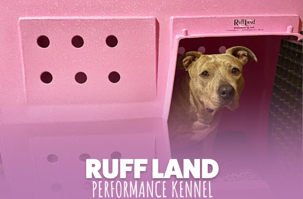 Ruff Land Review